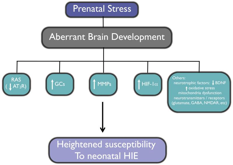 maternal stress and the effects of The interplay between maternal nutrition and stress during pregnancy: issues and considerations karen l lindsay have separately examined the effects of prenatal nutrition and stress on fetal development, pregnancy, and birth out.