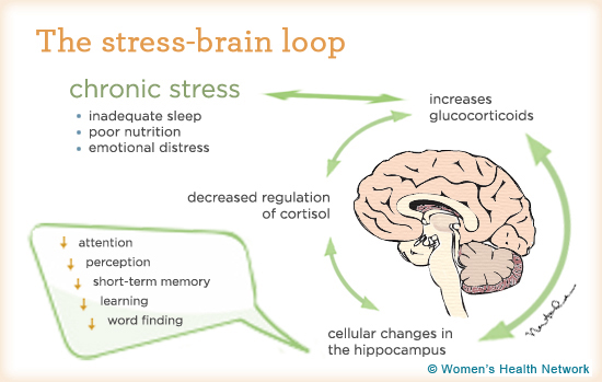 How Does Stress Affect the Immune System?